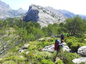 Der Weg hinab führt schnell in kleine Wälder und Olivenhaine. Oben links ist zwischen den Bergen schon der Cúber-See zu sehen.