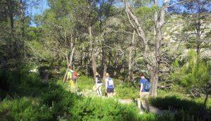 Der Kiefernwald, durch den ein kleiner Bach fließt, spendet Schatten und bringt uns dem Puig de l'Ofre immer näher.