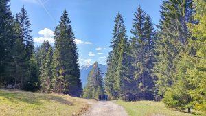 wank-abstieg-wald-forstweg