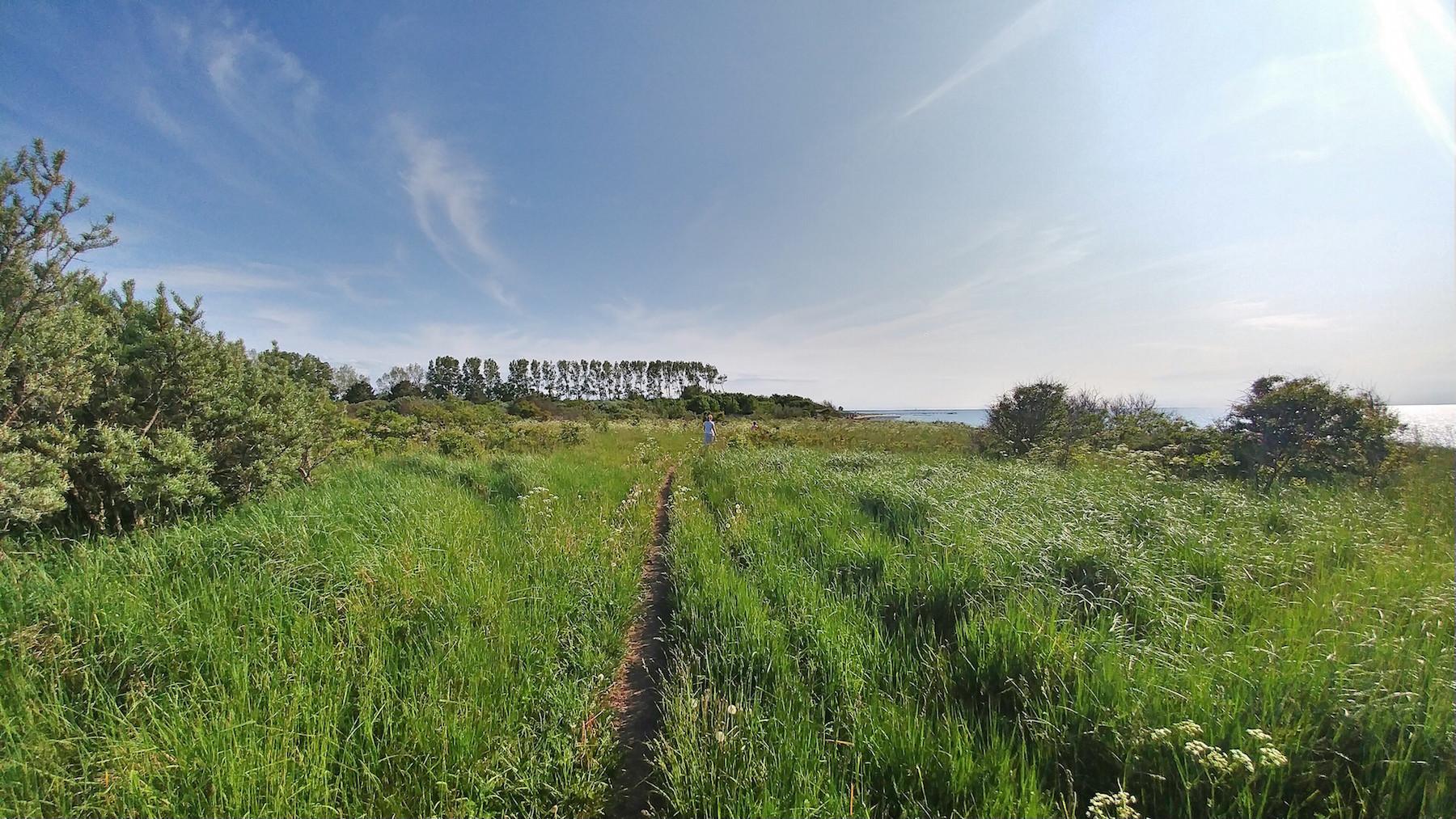 06-ostsee-wandern-e9-steilküste-ahrenshoop-wiesen