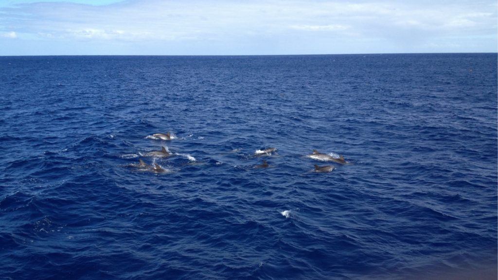 Meine aufgeweckten Begleiter die Delfine